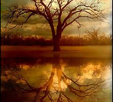 "A Place To ""Reflect"" by Elizabeth Burton"