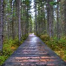 Forest Boardwalk by Dave Riganelli