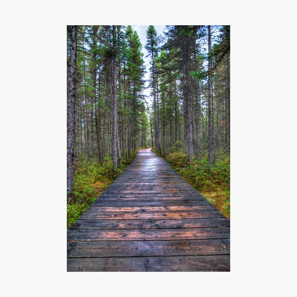 Forest Boardwalk Photographic Print