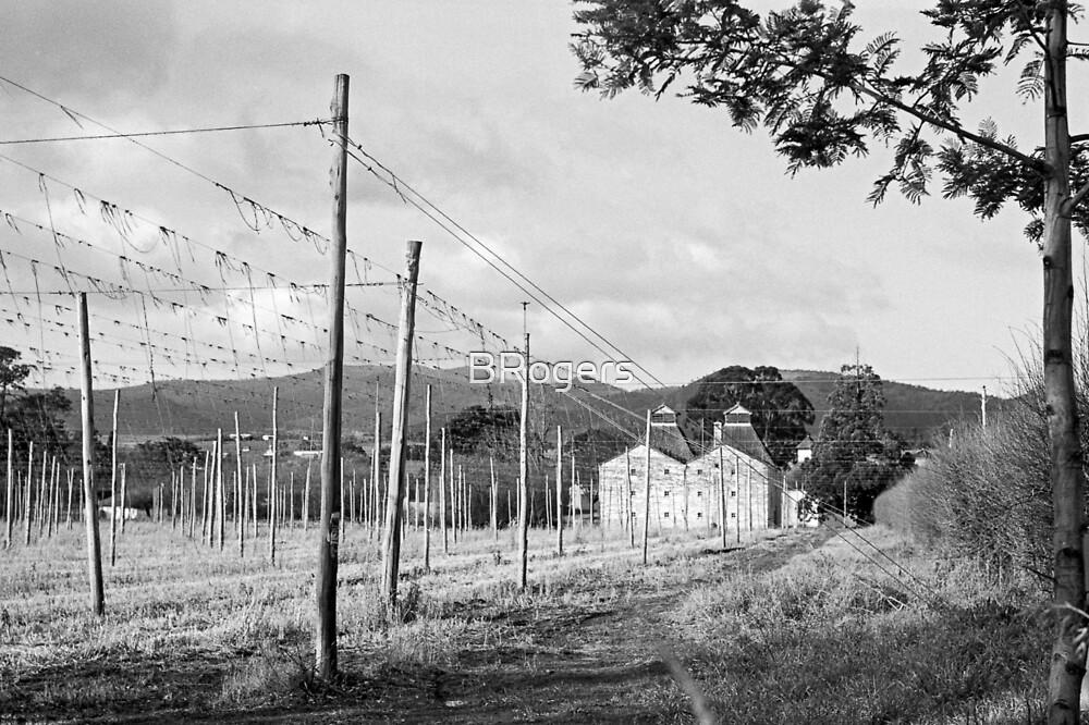Hops Fields, Tasmania by BRogers