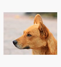 Stray Brown Dog on a Street Photographic Print