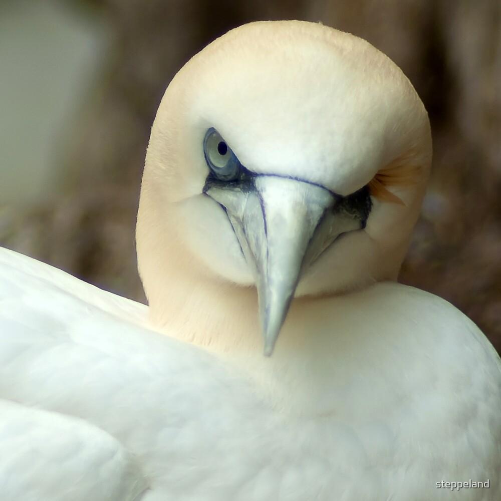 One Eyed Bird Wink  by steppeland