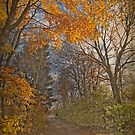 Autumn in Bavaria - path in the wood by Luisa Fumi