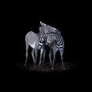 Zebra by Stuart Robertson Reynolds