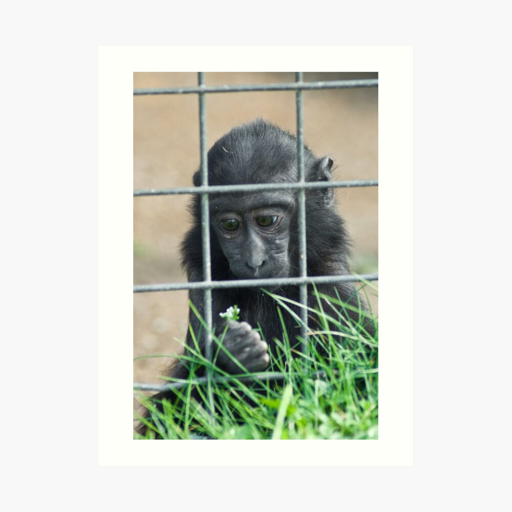 Caged thoughts... Art Print