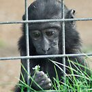 Caged thoughts... by Dave Riganelli