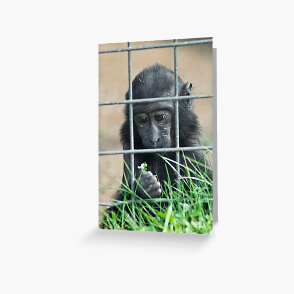Caged thoughts... Greeting Card