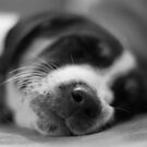Sleeping Puppy by Dave Riganelli