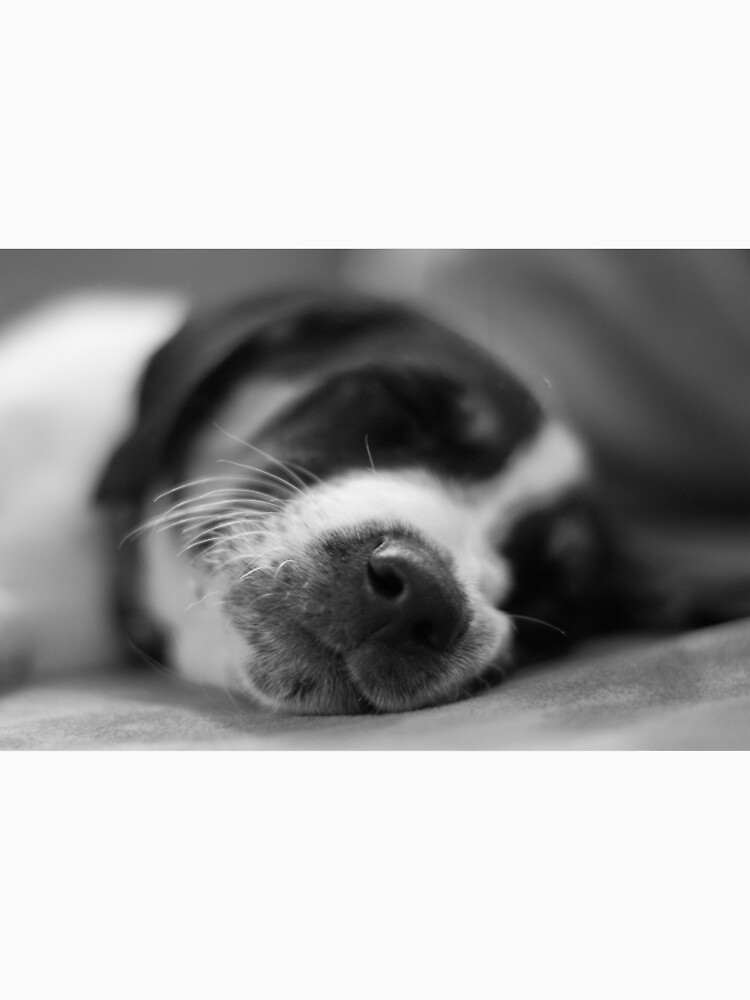 Sleeping Puppy by daveriganelli