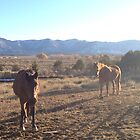 Color Photo of Two Horses in Front of the Mesa Verde Mountains by Marcie Alban