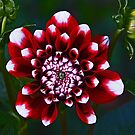 Tiger Red Dahlia by gameover
