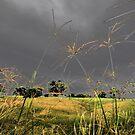 Angry Sky by Liz Worth