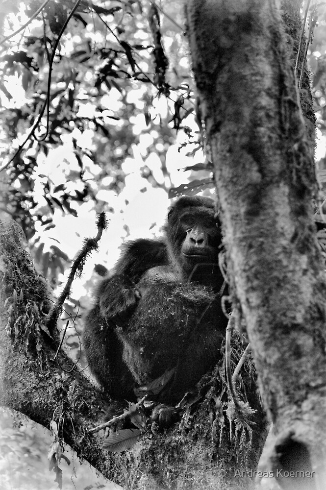 """""""Watchful Eyes of a good Friend"""" (B&W) by Andreas Koerner"""