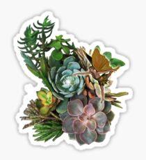 Succulent garden display Sticker
