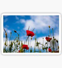 Summer Poppy Flower Sticker