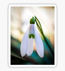 Single Snowdrop flower Sticker