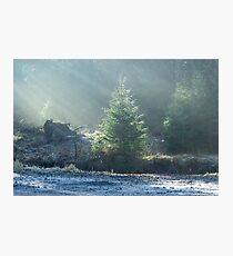 Illuminated Christmas Tree - Nature Photography Photographic Print