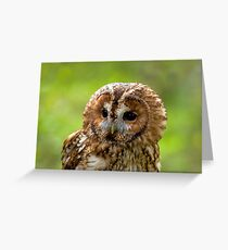 Tawny Owl head  Greeting Card