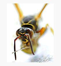 Wasp Photographic Print