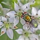 The Green Blowfly by Rick Playle