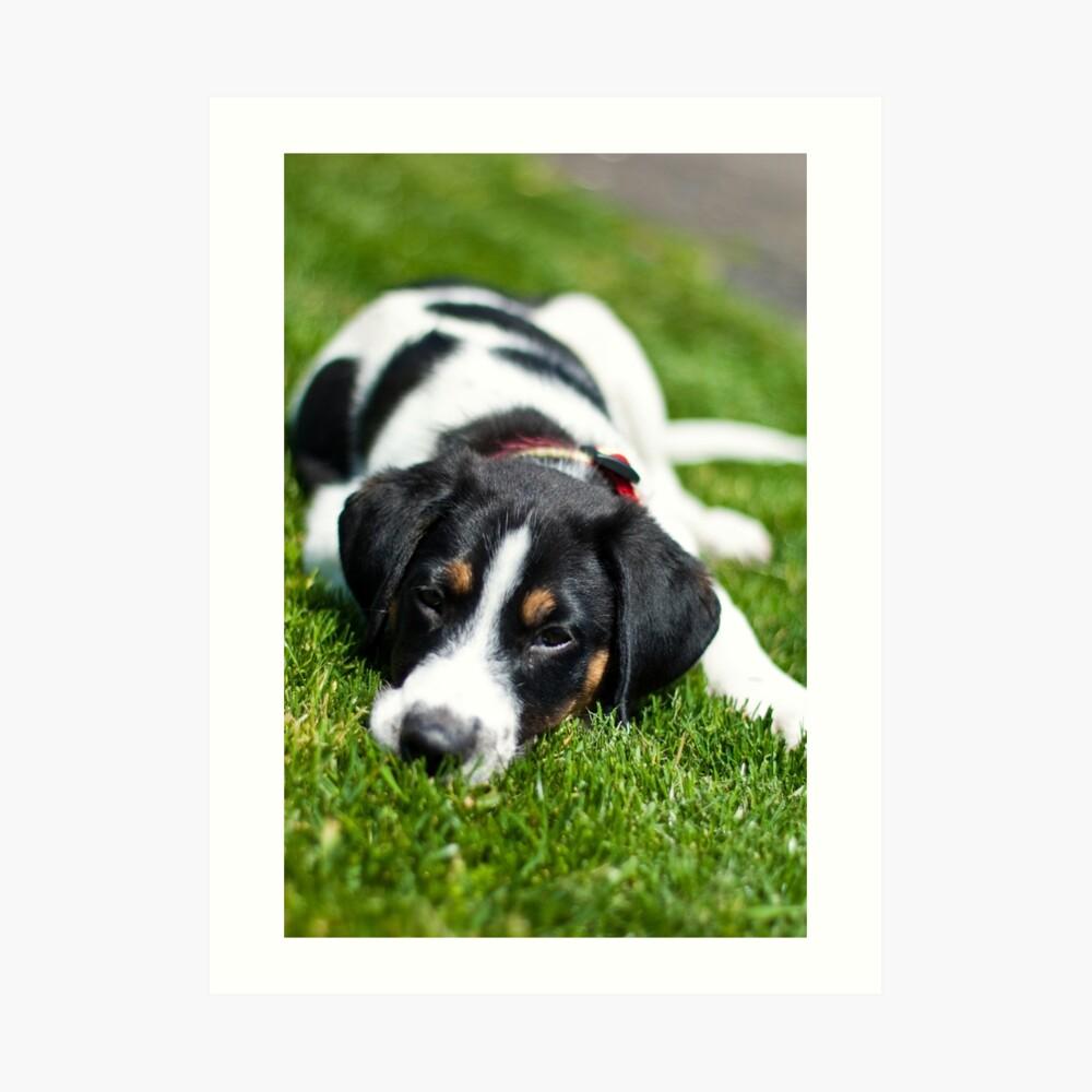 Puppy in the grass Art Print