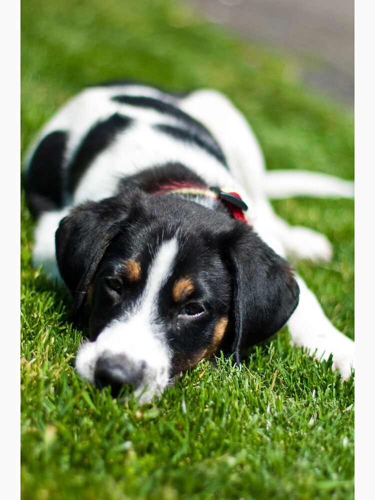 Puppy in the grass by daveriganelli
