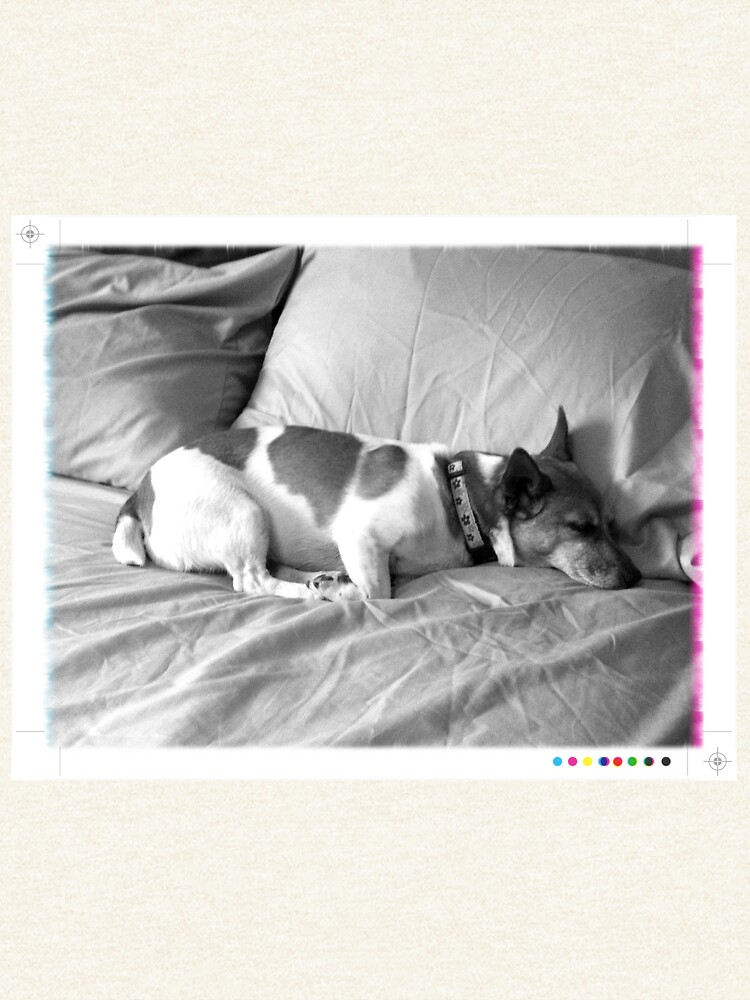 Jack in the bed by daveriganelli