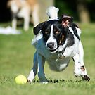 Fetch by Dave Riganelli