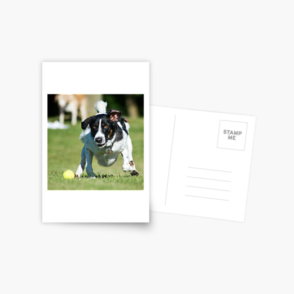 Fetch Postcard