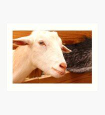A Proud Goat Art Print