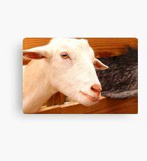 A Proud Goat Canvas Print