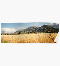 Cereal Field - Lasithi Poster