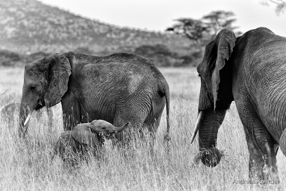 """""""Familial Bonds"""" - two (B&W) by Andreas Koerner"""
