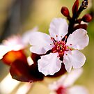 Signs of Spring Ahead by Kgphotographics