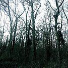 Dark woodland by FreyaCariad97