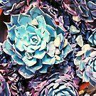 succulents  by FreyaCariad97