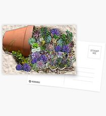 South Africa  Succulents Postcards