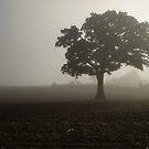 Mists & Mellow Fruitfulness by Jacki Stokes