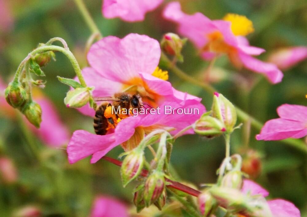 Honey Bee hard at work by Margaret Brown