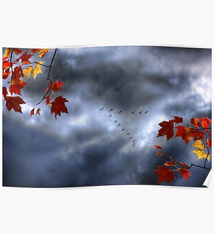 Blue Geese in a Red October Sky Poster