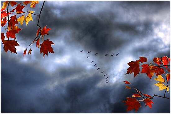 Blue Geese in a Red October Sky by Wayne King