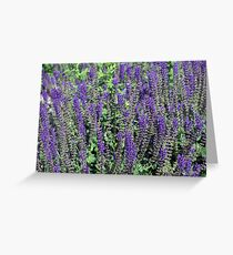 Longwood Gardens - Spring Series 145 Greeting Card