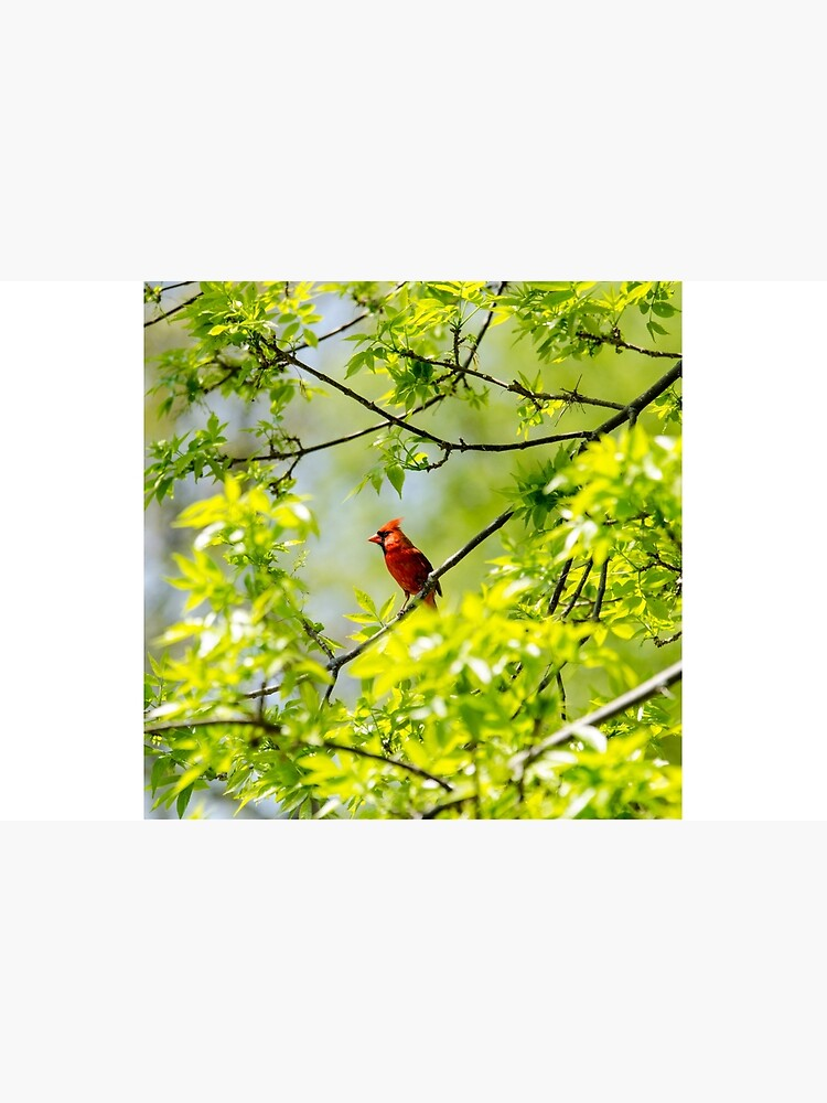 Robin in tree by daveriganelli