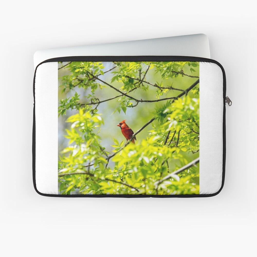 Robin in tree Laptop Sleeve