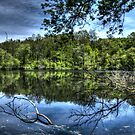 Reflected trees by Dave Riganelli