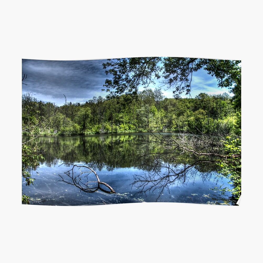 Reflected trees Poster