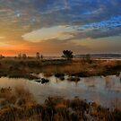 Morning Sky in the Wetlands by ienemien