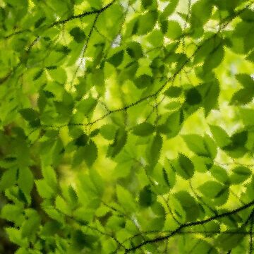 Blätter von ccb9951