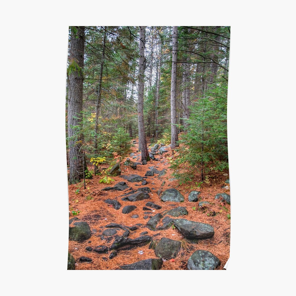 Rocky path through the pine forest Poster