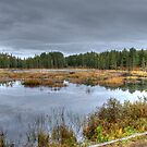 Wetlands by Dave Riganelli